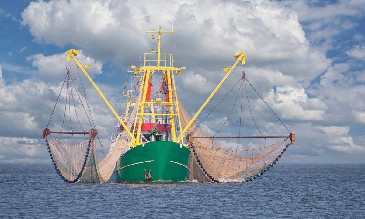 French Seafood Processor Saves Up to 36% in Energy With CO2 Cooling/Heating